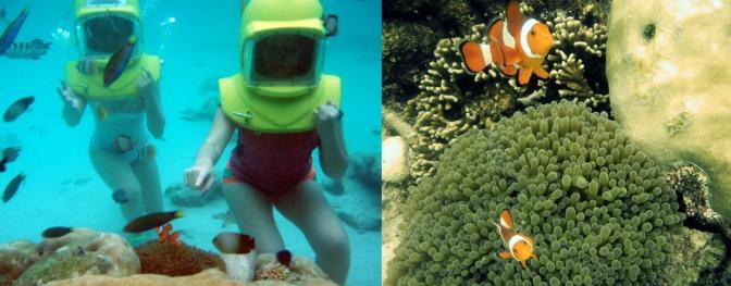 Helmet diving - We saw Nemo & Marlin!!!!